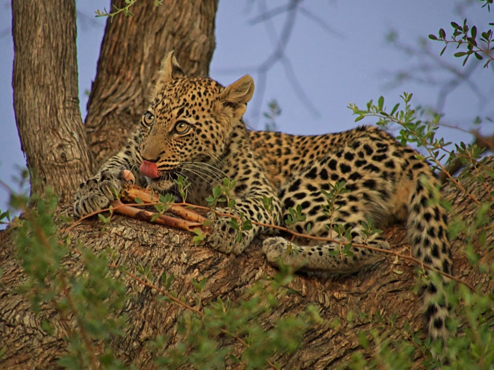 Africa : Wildlife