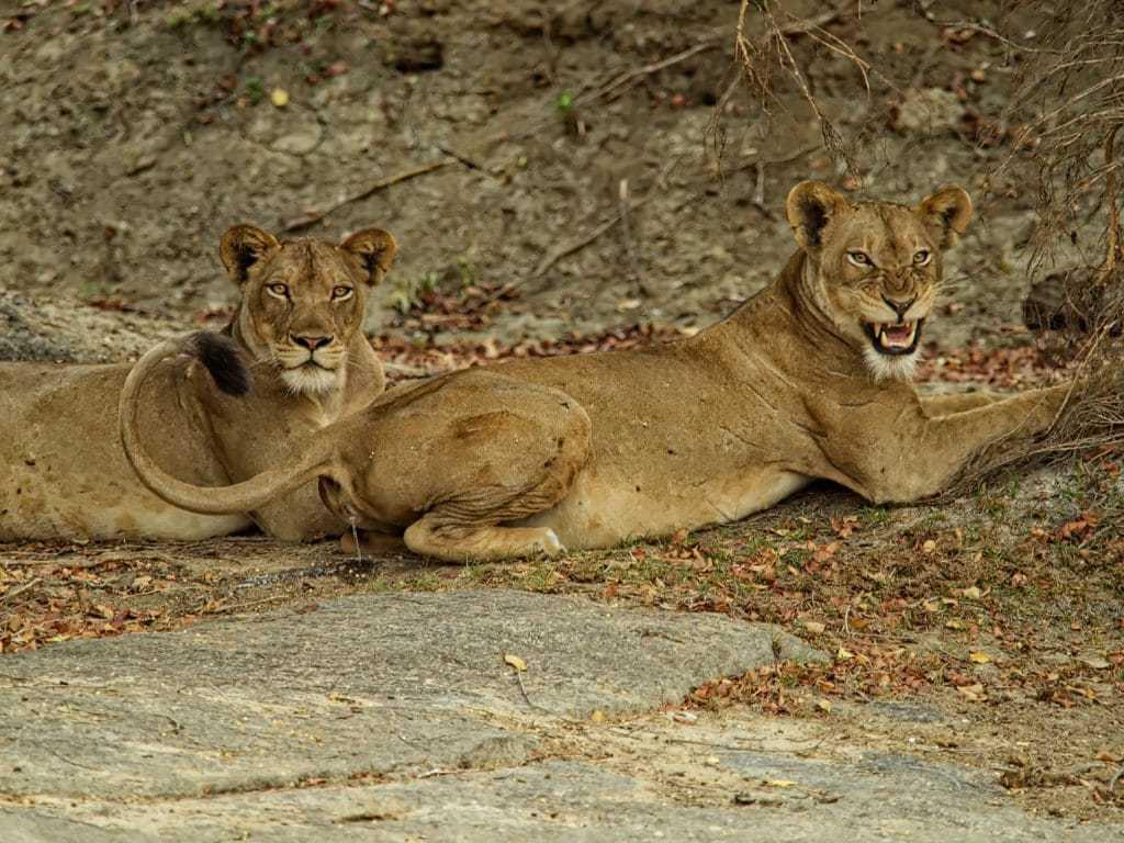Africa : Big Cats