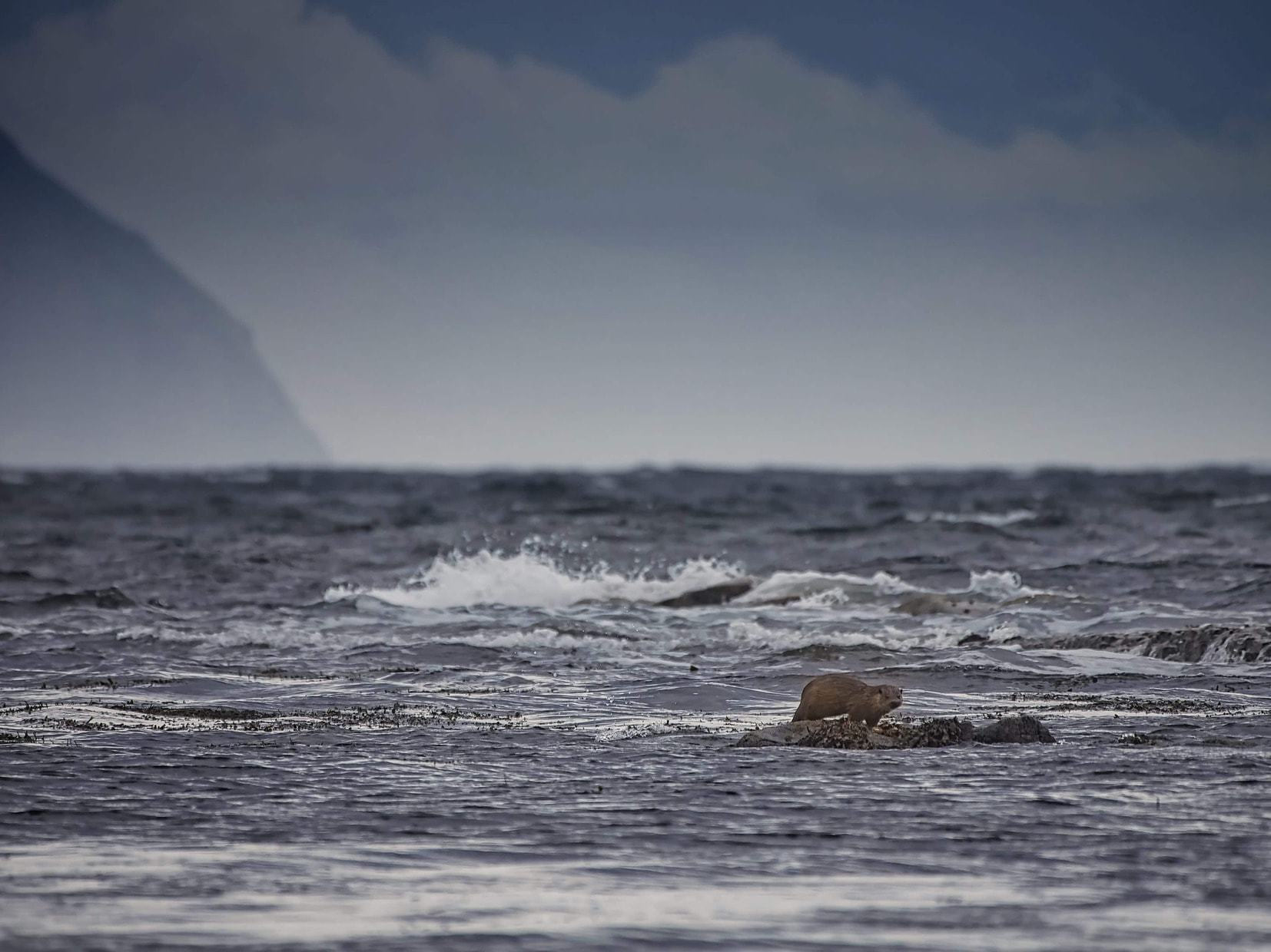 Islay + Jura + Arran : Whisky + More